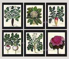 Unframed Botanical Wall Art Print Set of 6 Antique Vegetable Garden Home Decor
