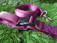 Special offer Purple collar and matching lead small dog / puppy handmade