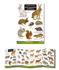 Field Guide to the Land Mammals of Britain Laminated Identification Chart Poster