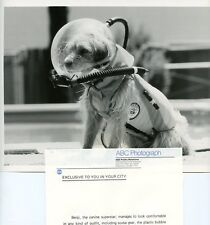 BENJI THE DOG IN SCUBA GEAR BENJI AT MARINELAND ORIGINAL 1981 ABC TV PHOTO