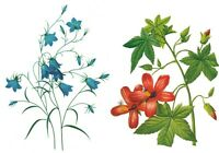 2 Charts-Redoute  Campanula Hibiscus Flowers  Counted Cross Stitch Pattern