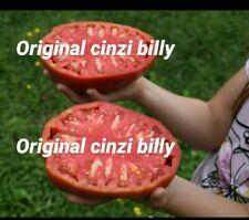 25 semi pomodoro gigante bistecca foto mia originale ( semi italiani ) bio