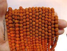 Rudraksha Rudraksh 5 Mukhi Loose 5mm Beads Yoga Meditation Wholesale Lot of 551