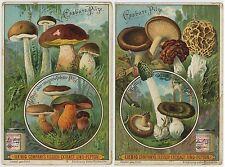 Vintage Advertising Trade Card: LIEBIG Co ANTWERP 1899 MUSHROOMS MORELS BOLETUS
