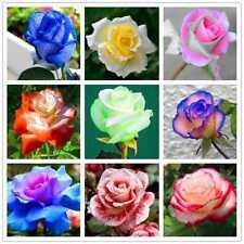 200 Stk Multi-Color Rainbow Rose Blumensamen Hausgarten Einfach Wachsen Anlage