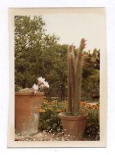 PHOTO ANCIENNE Jardin Cactus Plante exotique Vers 1960 Pot de fleurs COULEUR