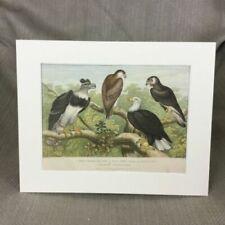 Antique (Pre - 1900) Natural History Original Art Prints