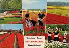 (vma) Postcard: Greetings From Dutch Gardens, Lisse Holland