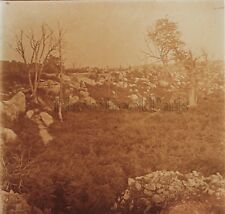 Forêt de Fontainebleau Photo Stereo R4 Verre Positive Vintage 1909
