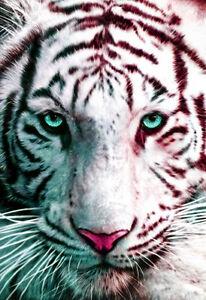 Tiger Poster, White Bengal Tiger, Big Cat