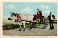 Charrette a boeuf Ox Cart Rural Quebec QC Que HV Henderson Unused Postcard