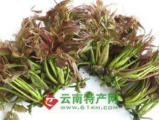 rare herb 香椿 chinese mahogany or red cedar -- toona sinensis edible SEEDS