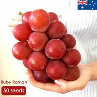 Ruby Roman Grape Seeds 50 RARE Grape Seed Unusual Fruit Vine Plant Japanese Tree