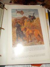 Eh Miner Chesapeake Bay & Labrador Retriever bookplate Print 1937 National Geo