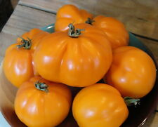 Russian Tomato - ALLADIN'S LAMP - 20 Heirloom Organic Vegetable Seeds
