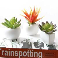3D Plants Succulent Cactus Fridge Magnet Sticker Removable Home Kitchen Decor