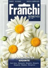 Franchi Seeds Giant Daisy Margherita Gigante seeds