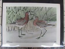 Original   Rex Brasher#244 Hand Colored Bird Print Curlew Sandpiper #244REX2 DSS