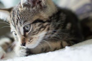 Cat Birthday Card Tabby Cat Card Blank Cat Greeting Card for Cat Mummy Cat Lover