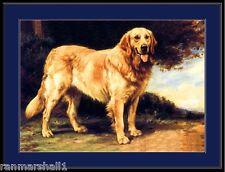 English Picture Print Golden Retriever Dog  Art
