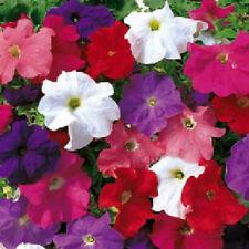 200 Pelleted Seeds Logro Mix Petunia Seeds Large Flowers BULK SEEDS