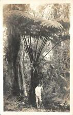 RPPC Tree Fern, Hawaii Postmarked Honolulu, HI 1935 Vintage Real Photo Postcard