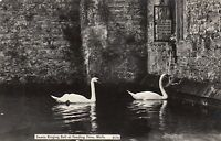 Postcard - Wells - Swans ringing bell at feeding time