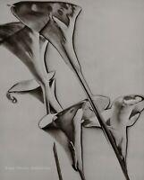 1930/75 Vintage MAN RAY Solarized CALLA LILY Flowers Still Life Photo Art 12x16