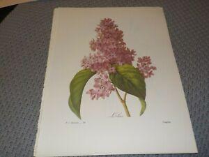 P J REDOUTE BOTANICAL PRINTS -10 x 13 Lot of 8 Vintage Botanical Book Plates