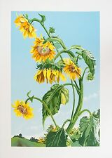 Sondra Freckelton: Sunflowers, State I, 1980. Signed, Limited Edition Print.