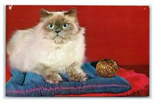 Postcard Champion Blue Point Himalayan Cat on Blue pillow & ornament A47