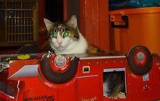 Scoot & Newts Presents  Blind Snarlz in a Broken Down Fire Truck 8 x 10