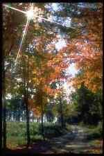 341061 Matawatchan Township Autumn Splendor A4 Photo Print