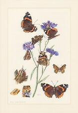 Briefmarken Gelernt Kleinbogen Mit Schmetterlingen Aus Dem Oman Mittlerer Osten
