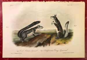Audubon Quadrupeds of America Hand Colored Print: Abert's & California Squirrel
