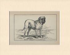 MASTIFF NAMED CHAMPION DOG  OLD ANTIQUE 1900 PRINT MOUNTED