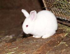 METAL REFRIGERATOR MAGNET Baby White Bunny Rabbit Bunnies Rabbits