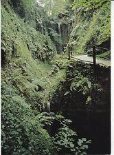 Shanklin Chine Isle of Wight Postcard unused VGC