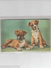Quietschekarte 2 HundeTyp Boxer AK Chiens Dogs Honden France 1601062