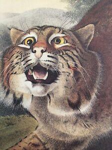"Common American Wild Cat Lynx Rufus Audubon Lithography Print 10"" x 13"" Plate 1"