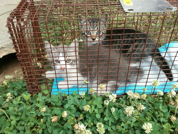 Whiskers Rescue