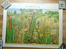 More details for vintage 1977 fen & fen carr british museum natural history wall chart