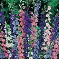 Rocket Larkspur Mix- 200 Seeds - - BOGO 50% off SALE