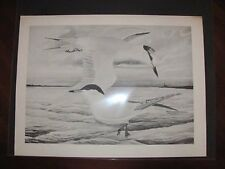 Original  Rex Brasher  #69  Black & White Proof  Print  Foster Tern #69REX2 DSS