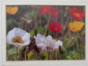 A COLOURFUL, WELL- FRAMED MEDIUM-SIZED PHOTO OF ICELAND POPPIES