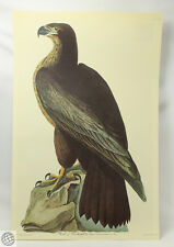 Audubon BIRD OF WASHINGTON Birds Of America Amsterdam Edition Johnso... Lot 1191