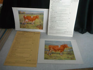 Vintage Official GUERNSEY Dairy COW BULL Poster PRINT & Judging Score Card 1939