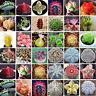 Gemischten Sukkulenten Kaktus Samen Feigenkaktus Pflanzen Bonsai Garten Dekor
