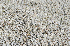 Seashell Oyster Shells Shards - Broken Pieces Bulk 1.5 LB Birds