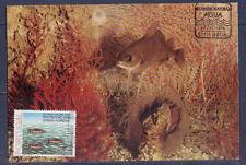 cma/ carte maximum   Portugal   poissons    1976